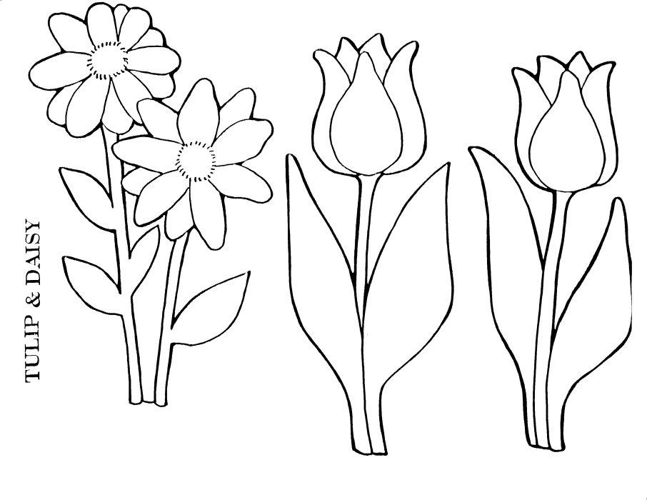 TulipDaisy.jpg (906×700)